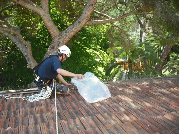 rimozione aghi di pino, pulizia grondaia